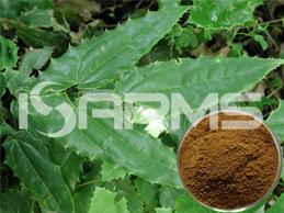 Epimedium-Extract