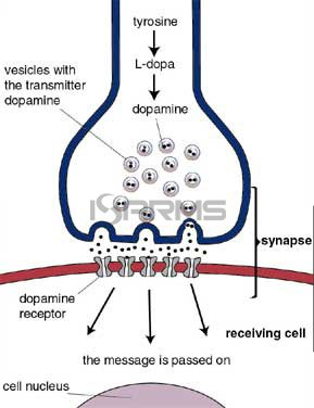 dopamine-diagram